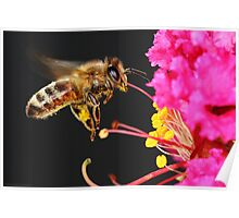 Honey Bee in Flight Poster
