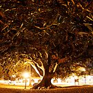 Engulfed in the Tree  by Vince Gaeta