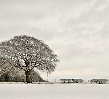 Snowy landscape, Elloughton, East Yorkshire, UK. by Nick Barker