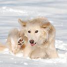 Icy Toes by Blackrock