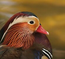 Mandarin Duck by Fred Barber