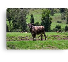 Cattle Country - Australia Canvas Print