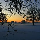 Winter Sundown by Carol Dawes