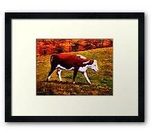 Cow in the Autumn Pasture Framed Print
