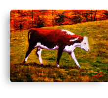 Cow in the Autumn Pasture Canvas Print
