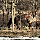 Pals in the Pasture by love2shoot