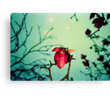 magnolia and moon Canvas Print