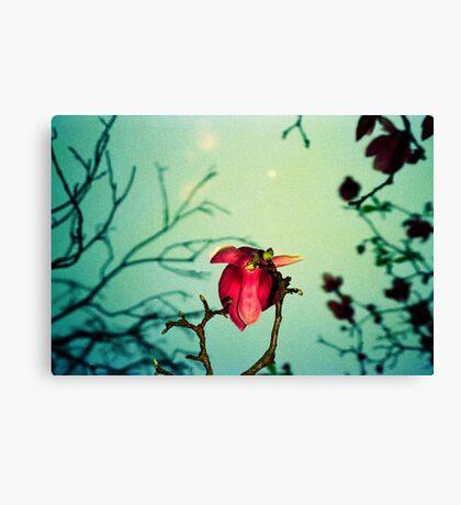 magnolia and moon Canvas Print