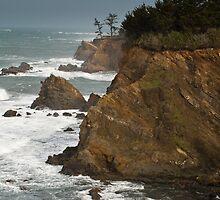 Arago Point, Cape Arago State Park, Oregon by Albert Dickson