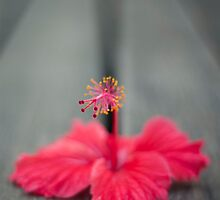 Hibiscus on the deck by Adrian Young
