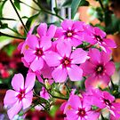 Beautiful in pink by Esperanza Gallego