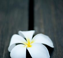 Frangipani on the deck by Adrian Young
