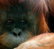 Sad Orangutan by ClocwisePicaso