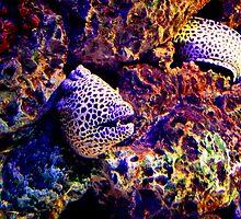Moray Eel by Charles Buchanan