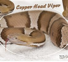 Copper headed Viper by MidnightRocker