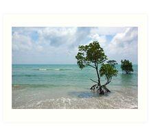 Mangroves, Far North Queensland. Art Print