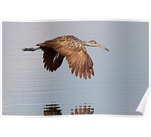 Wing Tips Poster