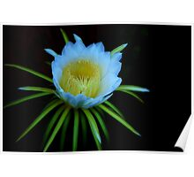The Night-Blooming Cereus,#1 Poster