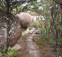 Bald Rock Walking Track by Driussi