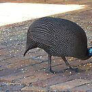 Guinea fowl mother  by fourthangel