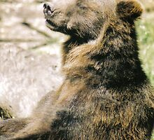 Sunbathing Bear by stuart powell