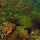 Coral Reef by mrfriendly