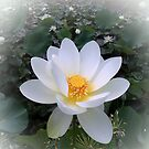 White Lotus by Bevellee