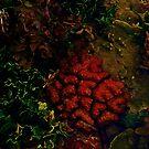 Brain Coral by mrfriendly