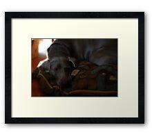 Maisie Daisie 3 Framed Print