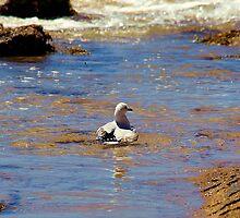 Seagull Bath by Rhonda F.  Taylor