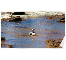 Seagull Bath Poster