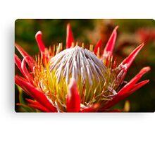 Red Flower - Mt. Dandenong, Australia Canvas Print