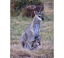Red-necked Wallaby and Joey Photographic Print
