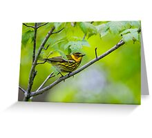 Cape May Warbler -  Ottawa, Ontario Greeting Card