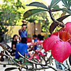 rosy pink by hpyroli