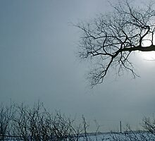 Solitary Bleak Tree in Winter - Silhouette by DMHImages
