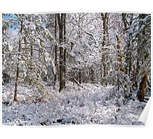 Snow Frosted Forest Poster