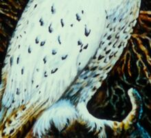 Snowy White Owl~Relief wood carving, painted with acrylics (11x17) Sticker