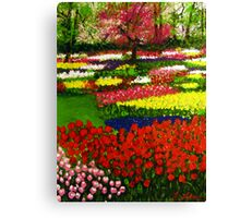 Spectacular Netherlands Tulips Garden Canvas Print
