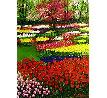 Spectacular Netherlands Tulips Garden Photographic Print