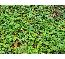 Dew on green plants that grow from the fallen yellow leaves Photographic Print