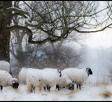 Winter Woollies. by CJTill