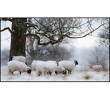 Winter Woollies. Photographic Print