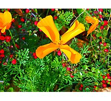 Large yellow and orange flowers close up Photographic Print