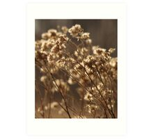 Wild Cotton Art Print