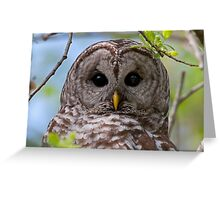 Barred Owl at McGregor Marsh Greeting Card