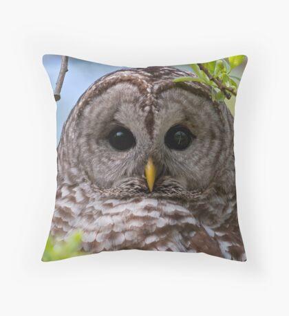 Barred Owl at McGregor Marsh Throw Pillow