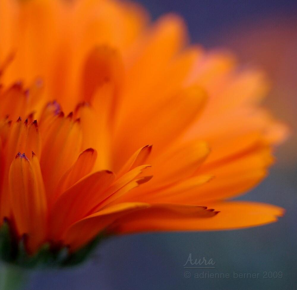 Aura by Adrienne Berner