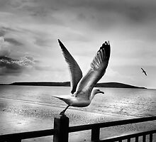 Freedom by Mike  Sherman