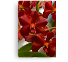 Red Orchids Canvas Print